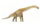Afbeelding Brachiosaurus