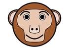 Afbeelding r1 - aap