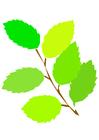 Afbeelding bladeren lente