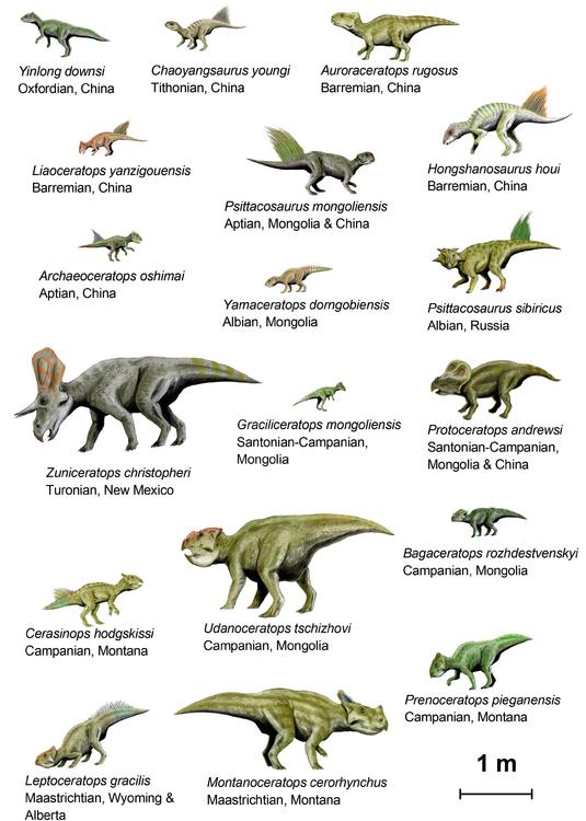 Afbeelding Dinosaurussen Basal Ceratopsia