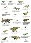 Afbeelding dinosaurussen ( basal ceratopsia )