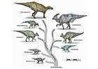 Afbeelding dinosaurussen evolutie