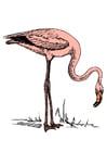 Afbeelding flamingo
