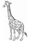 Kleurplaat giraf