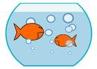 Afbeelding goudvissen