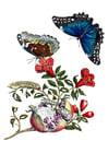 Afbeelding granaatappel met vlinders
