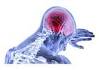 Afbeelding hersens