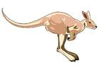 Afbeelding kangoeroe