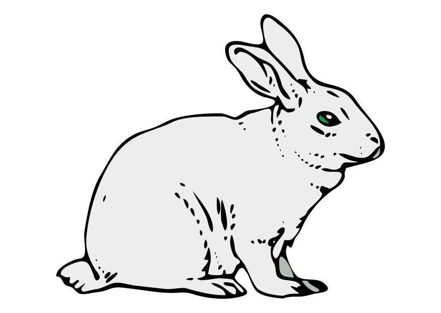 afbeelding konijn gratis afbeeldingen om te printen