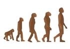 Afbeelding menselijke evolutie