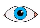 Afbeelding oog