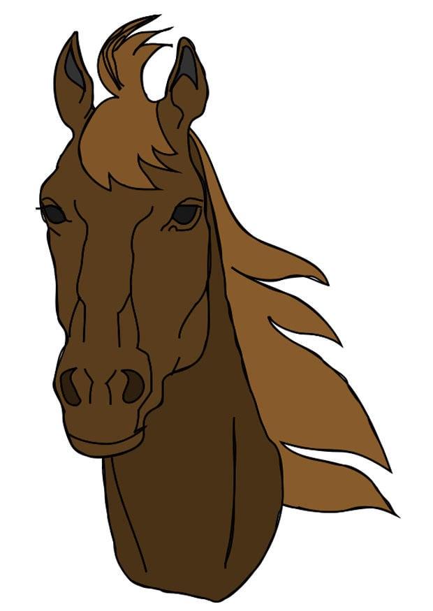 Afbeelding Prent Paardenkop Afb 20758