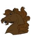 Afbeelding paardenkop