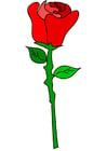 Afbeelding rode roos