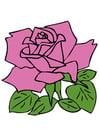 Afbeelding roos