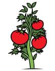 Afbeelding tomatenplant