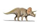 Afbeelding triceratops