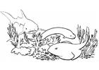 Kleurplaat vissen - haai