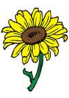 Afbeelding zonnebloem