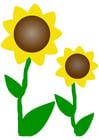 Afbeelding zonnebloemen