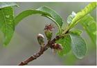 Foto 4. beginnend fruit - midden lente