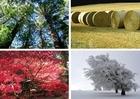 Foto 4 seizoenen