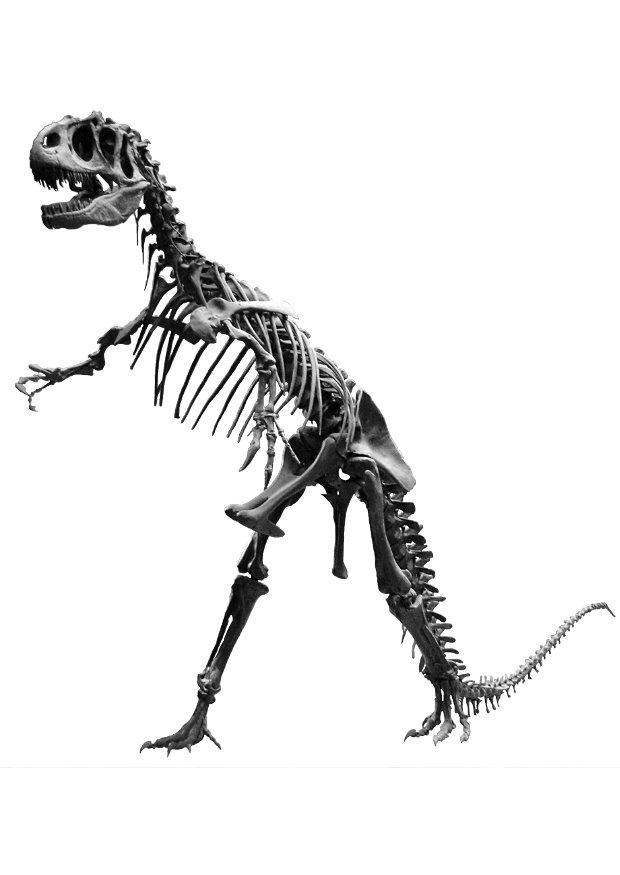 foto allosaurus skelet gratis foto s om te printen