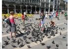 Foto Duiven voederen op San Marco plein, Venetië