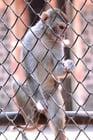Foto aap in gevangenschap
