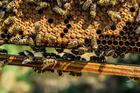 Foto bijen