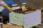 Foto bijenkast