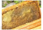 Foto bijenkorf raten honing