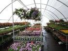 Foto bloemen en planten