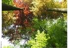 Foto bomen