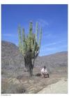 Foto cactus in woestijn