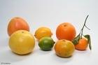Foto citrusvruchten