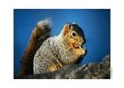 Foto eekhoorn