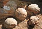 Foto fossielen - dinosaurus eieren