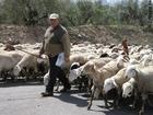 Foto herder