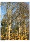 Foto herfst - bomen