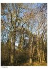 Foto herfst in het bos