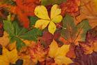 Foto herfstbladeren