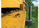 Foto honingbij bij korf
