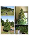 Foto kerstboom kopen