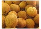 Foto kokosnoot