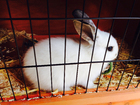 Foto konijn in kooi