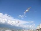 meeuwen aan het strand