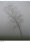 Foto mist