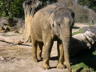 Foto olifant