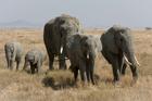 Foto olifanten